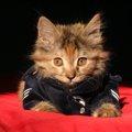 警察猫として活躍した「ルーシク(Rusik)」その功績について