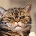 猫が落ち着けない『飼い主のNG生活習慣』3つ