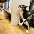 【話題】はっけよいのこった!犬VS猫の一番勝負に相撲協会も注目?