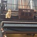 猫の町『谷根千」へ!住民より住猫が多い?!下町風情溢れる街のみど…