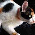 猫の霊感と本当にあった不思議な話