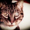 猫が白内障になる5つの原因と症状、その治療法とは