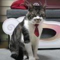 イケメン猫ちゃん、ネクタイをしめてリモートワーク?