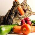 猫にとって危険な『野菜』6選