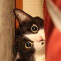 猫が隙間を好む3つの理由と通れる大きさ、侵入を阻止する方法