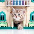 インテリア性も欲しい!猫ちゃんとの暮らしのアイディア