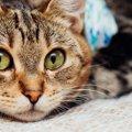 猫の不妊手術(避妊・去勢手術)費用や助成金、受けさせるメリット・デ…