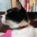 靴ひもで愛猫のおまもり首輪を簡単マイナーチェンジ