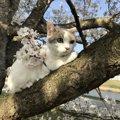 猫はどんなお天気が好き?過ごしやすい季節とは