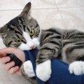 猫がキックをする心理3つ!やめてほしい時の対処法まで