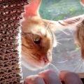 爪とぎの塔の窓からひょっこり!顔をのぞかせている猫ちゃんは誰?