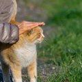 野良猫が寄ってくる人の5つの特徴