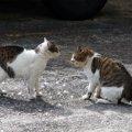 猫が威嚇する声や仕草とは?「シャー」と言う理由まで