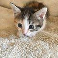猫がポカーンとしているときの心理4つ