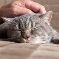 猫を触る正しい方法 3つのステップと4つのポイント