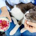 猫カフェ「れおん」保護活動とお店の内容