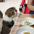 食べたいにゃ〜♡さつまいもに興味津々の猫さんたち