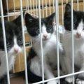 寒い雨の中で泣き叫ぶ子猫たち…家族の一員になり幸せな猫生へ!