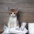 愛猫の血便、心配ですよね?血便の原因や対処法など、お伝えします!