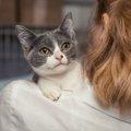 猫の探し方はネットが一番?方法から予防まで