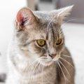 猫がゲロを吐く!健康な場合と病気の場合の違いとは