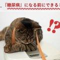 【獣医師解説】ねこちゃんが糖尿病になる前にできること