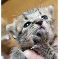 拾われてセンターに持ち込みされた子猫の辿る運命を知っていますか?
