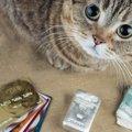 猫の医療費ってどのくらいかかるの?