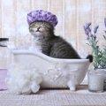 猫がお風呂嫌いな理由とは?治す方法やシャンプーする時のコツ