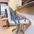 飼い主の席を横取りする猫の気持ち4つ