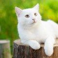 白猫の子猫の特徴・迎え入れる方法