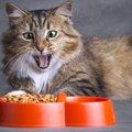 猫の食事量、どのくらいが適切?子猫や持病がある猫のケースも紹介
