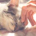 痛みやストレスを消してくれる!?猫の『ゴロゴロ』にはすごい癒しの…