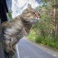 猫と泊まれる宿へお出かけ!準備しておく3つの事