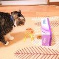 簡単!愛猫の為にもぐらたたき風のおもちゃをティッシュケースで手作…