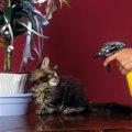 猫にしつけスプレーを使おう!作り方からおすすめ商品まで