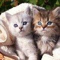 猫の目の色は何種類あるか知っていますか?