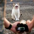 猫との思い出写真どうしてる?ディスプレイと収納術
