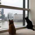 遊び相手は窓の外!窓ふきのお兄さんが大好きな猫さん