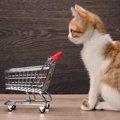 猫をペットショップで購入するメリットと注意点