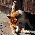 猫の匂い袋とは?役割や炎症、破裂した時の対処法、お手入れ方法まで