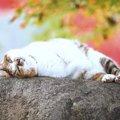 猫の雑学!7つのにゃんこトリビアをあなたはいくつ知っていますか?