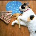 『熱中症』になりやすい猫の特徴3選!あなたの愛猫は大丈夫?