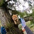 木に登って困り果てる猫たち…性格が表れる救助の様子とは?