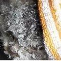 凍死寸前!極寒のロシアの道端で凍えていた子猫