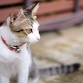 猫に鈴をつけるのはNG?それともOK?一体どちらが正しいのでしょう?