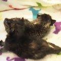 生後間もない子猫たち。母から引き離され駐車場に捨てられた命を救え