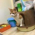 トイレの砂を食べてしまう愛猫…解決した1つの方法