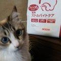 下部尿路ケアにおすすめ!「Dr.'s Careドクターズケア」猫用スト…