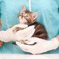 猫の皮膚病の薬について